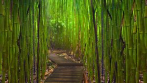 87784__bamboo-pathway_p